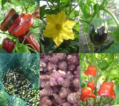 agriculture-biologique-legumes-fruits-ab-mediterranee-nice