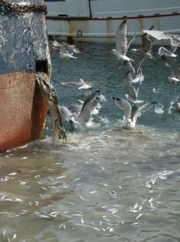 criee-aux-poissons-sete-1337109450